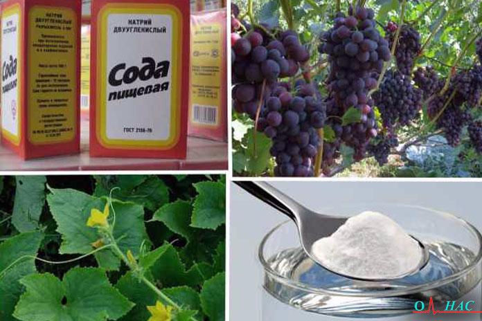 сода и фрукты